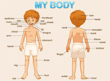 тело мое Стоковое Фото