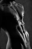 тело Стоковые Фотографии RF