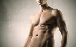 тело brawny Стоковая Фотография RF