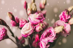Тема валентинки предпосылки розового букета цветка розового серая Стоковая Фотография RF