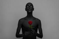 Тема готических и хеллоуина: человек при черная кожа держа красную розу, черную смерть изолированную на серой предпосылке в студи Стоковое Фото