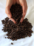 Тема культуры кофе Стоковые Фотографии RF