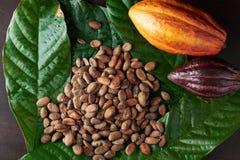 Тема плантации фермы какао Стоковая Фотография RF