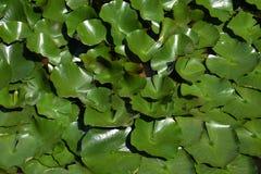 Тема предпосылки лилии стоковое фото