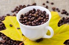 тема разрешения изображения цветка кофе высокая Стоковые Фотографии RF
