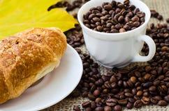 тема разрешения изображения цветка кофе высокая Стоковые Изображения
