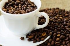 тема разрешения изображения цветка кофе высокая Стоковая Фотография