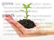 тема роста Стоковые Изображения RF