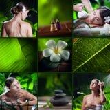 тема спы frangipani цветка шара Стоковое Фото