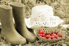 тема фермы Стоковое фото RF