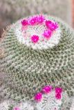 тема цветка флоры кактуса Стоковые Фото