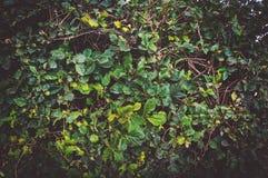 Темная ая-зелен стена лист, абстрактная предпосылка Стоковые Фото