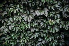 Темная ая-зелен предпосылка лист, картина Стоковая Фотография
