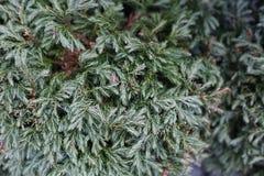 Темная ая-зелен текстура листьев Стоковые Фото