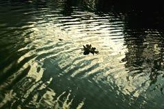 темная вода Стоковое Изображение RF