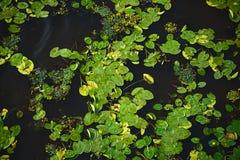 темная вода Стоковые Фото