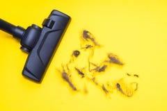 Темная голова современного будучи использованным пылесоса пока вакуумирующ стоковые фото