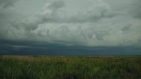 Темная гроза Rolls внутри над прерией Флориды, 4K видеоматериал