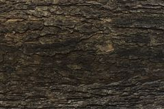 Темная деревянная текстура большого дерева Стоковые Изображения