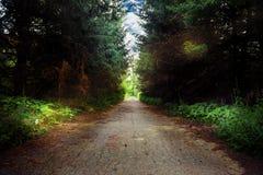 темная дорога пущи стоковая фотография
