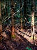 темная древесина Стоковые Изображения RF