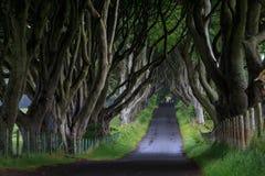 Темная изгородь, Северная Ирландия Стоковые Фотографии RF