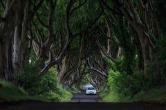 Темная изгородь, Северная Ирландия Стоковые Изображения RF