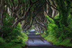 Темная изгородь, Северная Ирландия Стоковое фото RF