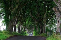 Темная изгородь, Северная Ирландия Стоковое Изображение RF