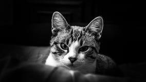 Темная киска Стоковая Фотография RF
