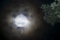 темная ноча луны стоковые изображения rf