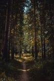 Темная дорога леса в лесе осени Стоковые Изображения