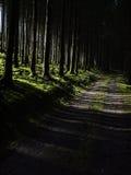 Темная дорога леса стоковая фотография