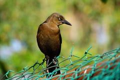 Темная птица в профиле Стоковое фото RF