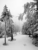 Темная пуща в ландшафте зимы (чернота & белизна) Стоковые Изображения RF