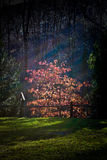 темная радуга Стоковая Фотография