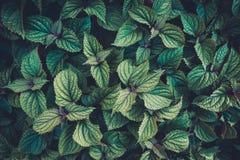 Темная растительность Стоковая Фотография