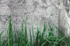 Темная серая грубая конкретная текстура каменной стены, зеленая трава, деревенское горизонтального крупного плана макроса старое  Стоковая Фотография