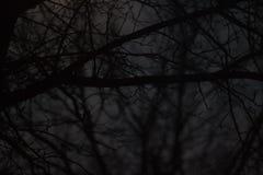 Темная съемка через страшные деревья стоковое изображение