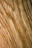 темная текстура деревянная Стоковая Фотография RF