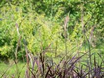Темная трава 01 Стоковая Фотография