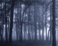 темная туманнейшая пуща Стоковые Фотографии RF