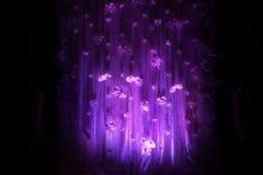 Темная фиолетовая предпосылка цветка Стоковое Изображение