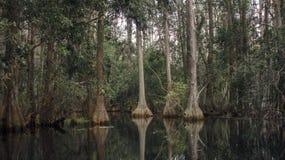 Темное болото Cypress пруда, испанский мох, охраняемая природная территория соотечественника болота Okefenokee Стоковые Фотографии RF