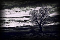 Темное и загадочное дерево Стоковые Изображения