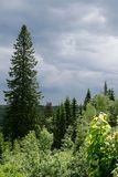 Темное небо над лесом Стоковое Фото