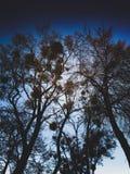 темное небо Стоковое Изображение