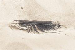 Темное перо птицы на песке Стоковая Фотография