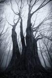 Темное пугающее гигантское дерево на хеллоуине Стоковое Изображение