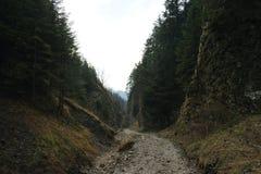 Темное ущелье горы Стоковое Изображение